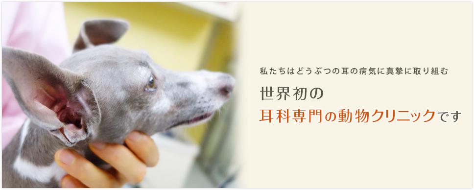 耳専門の動物クリニックです