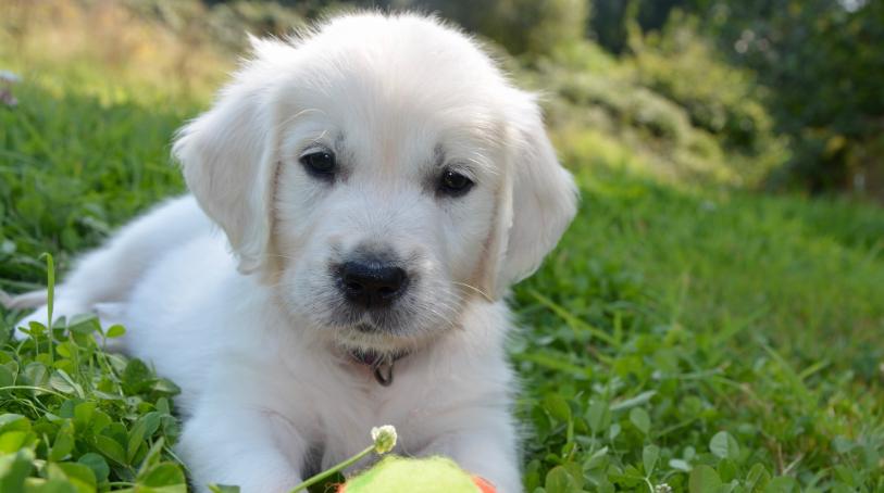 犬の外耳炎治療イメージ