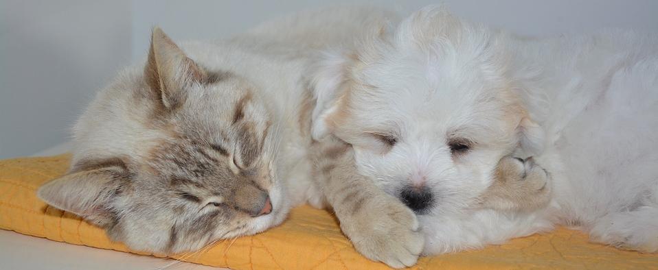 犬と猫の外耳炎治療イメージ